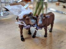 Koeien die gehuwd worden stock afbeelding