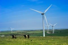 Koeien die onder windturbines weiden Royalty-vrije Stock Fotografie