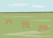 Koeien die op gebied weiden Royalty-vrije Stock Afbeeldingen