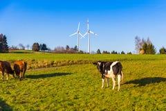 Koeien die op weide en windturbines in landelijke lan als achtergrond weiden Royalty-vrije Stock Afbeeldingen