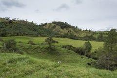 Koeien en bergen Royalty-vrije Stock Fotografie