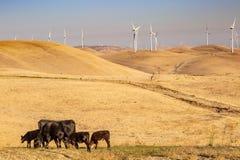 Koeien en een Windlandbouwbedrijf royalty-vrije stock foto's