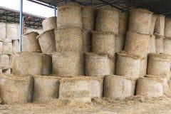 Koeien en hooi in de schuur Royalty-vrije Stock Foto