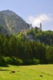 Koeien en Neuschwanstein-Kasteel Royalty-vrije Stock Afbeeldingen