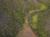 Koeien en stieren luchtfoto in de aard royalty-vrije stock afbeeldingen