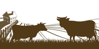 Koeien en van Landbouwbedrijf Rolling Heuvels Landschap Stock Afbeeldingen