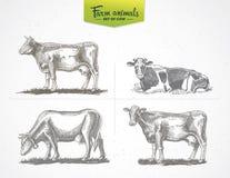 Koeien in grafische stijl stock illustratie