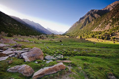 Koeien, gras en bergen Stock Fotografie
