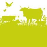 Koeien op de weide vector illustratie