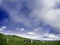 Koeien op een gebied Royalty-vrije Stock Foto