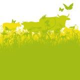 Koeien op weiland vector illustratie
