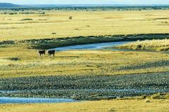 Koeienlandbouwbedrijf en het gras Stock Afbeeldingen