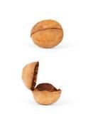 Koekjes in de vorm van noten, twee soorten binnen en openlucht  Stock Foto's