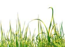 Koel groen gras royalty-vrije illustratie