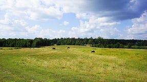 Koelandschap Royalty-vrije Stock Fotografie