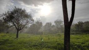 Koele de zomerregen en de zon stock afbeeldingen