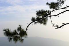 Koele hemel vóór Zonsopgang in Phurua Royalty-vrije Stock Fotografie