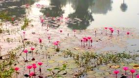 Koele het behang van de vijverwaterlelie royalty-vrije stock foto's