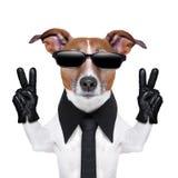 Koele hond Stock Foto's