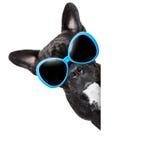 Koele hond Stock Afbeeldingen