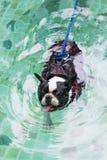 Koele hond Stock Fotografie