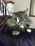 Koele Kat Stock Afbeeldingen