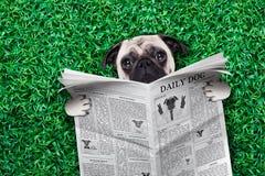 Koele pug hond stock afbeelding