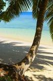 Koele schaduw van palmtree royalty-vrije stock afbeeldingen