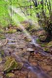 Koele stroom in het park Royalty-vrije Stock Afbeelding