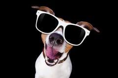 Koele zonnebrilhond Royalty-vrije Stock Foto's