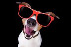 Koele zonnebrilhond Royalty-vrije Stock Foto