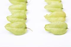 Koelreuteria paniculataï ¼ Œtree ziarna strąki Zdjęcia Royalty Free