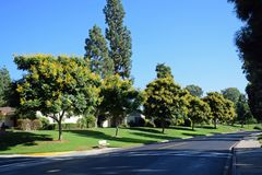 Koelreuteria-paniculata oder Goldenrain-Baum Stockfoto