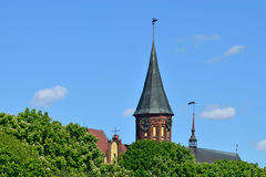 Koenigsberg Cathedral and flowering chestnuts Royalty Free Stock Image