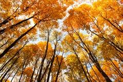 Koepel van oranje bladeren. Royalty-vrije Stock Afbeelding