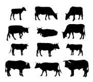 Koesilhouet - grafische vectorsilhouetten van koeien, stier en kalf Stock Afbeelding
