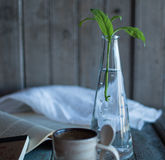 Koffie en een boek en houseplant stock foto's