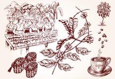 Koffie het oogsten Uitstekende illustratie van koffie makend proces Royalty-vrije Stock Foto's