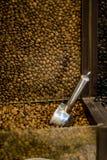 Koffie in korrels Stock Afbeeldingen