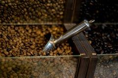Koffie in korrels Stock Foto