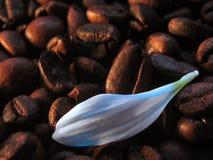 Koffie met melk Royalty-vrije Stock Foto's