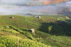 Koffieaanplanting Royalty-vrije Stock Afbeeldingen