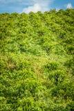 Koffieaanplanting in Jerico Colombia Royalty-vrije Stock Afbeeldingen