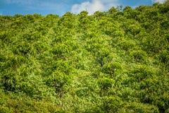 Koffieaanplanting in Jerico Colombia Stock Fotografie