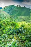 Koffieaanplanting in Jerico Colombia Stock Afbeeldingen