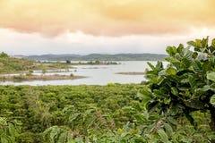 Koffieaanplantingen Royalty-vrije Stock Foto