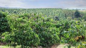 Koffieaanplantingen van Oostelijk Vietnam stock video