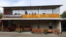 Koffiearabica Merapi stock foto's
