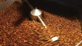 Koffiebonen in de molen die - geroosterde koffie mengen stock footage