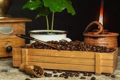 Koffiebonen en koffiezaailingen Koffie handel Gewassenproductie De reclame van de koffie Royalty-vrije Stock Afbeelding